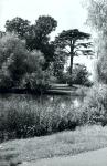 The pond at Baylis Park. August 2000